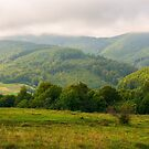 landscape with fields and  forest on hillside by mike-pellinni