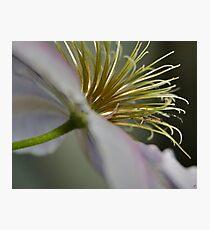 Summer Flower II Photographic Print