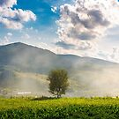 lonely tree on the meadow in smoke by mike-pellinni