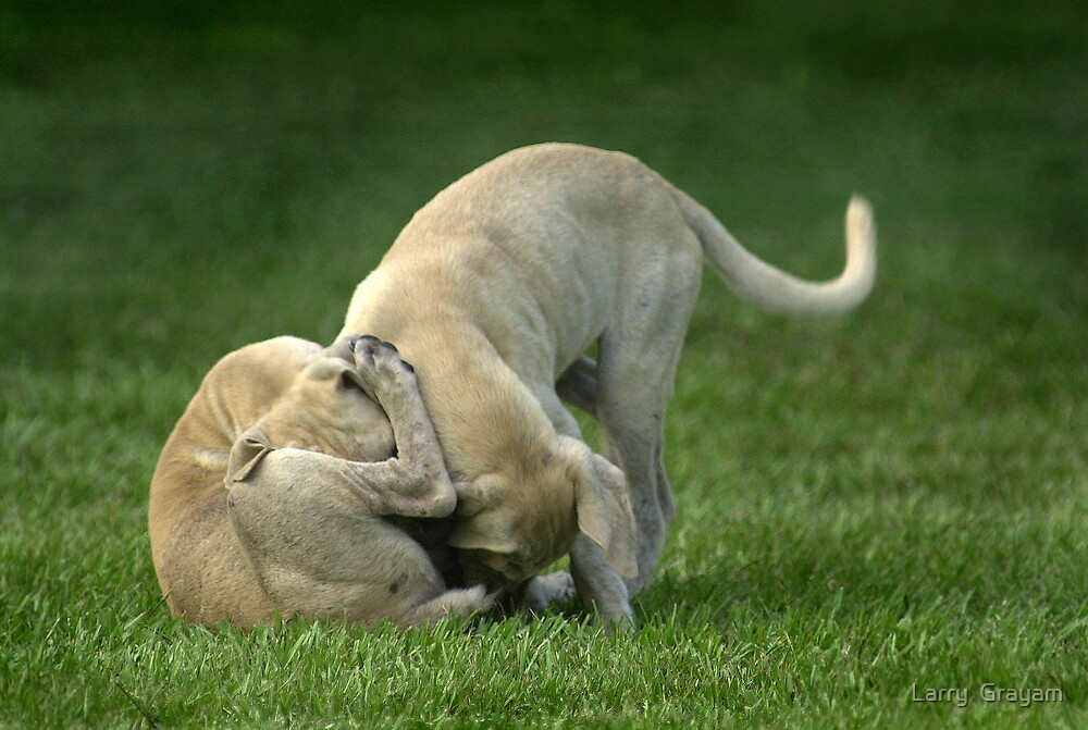 wrestling puppies by Larry  Grayam