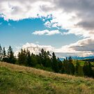 forested grassy hills on a cloudy day by mike-pellinni
