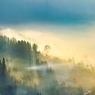 trees in glowing morning fog by mike-pellinni