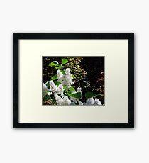 White Lilacs Framed Print