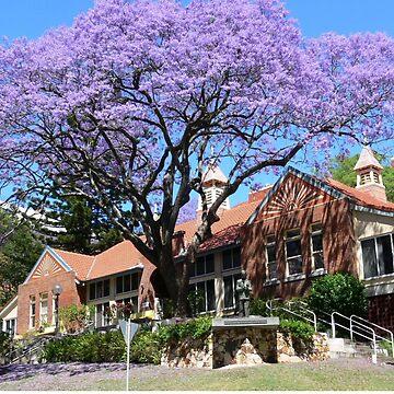 Jacaranda tree, Australia by PhotosByG