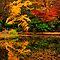 Autumn Colours Challenge