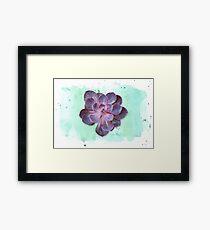 Purple Echeveria on Watercolour Background (horizontal) Framed Print
