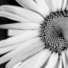 Black and White Flower by Amber D Hathaway Photography