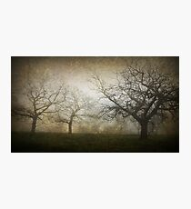 Ghostly Trees, Textured Photographic Print
