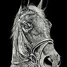 Dressage Horse by bellestone