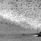 Starlings over West Pier by 416studios