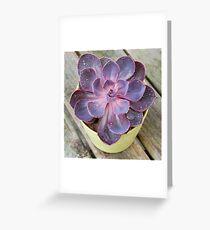 Purple Pearl  Greeting Card