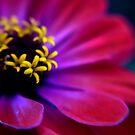 Pink Petals by Garry Schlatter
