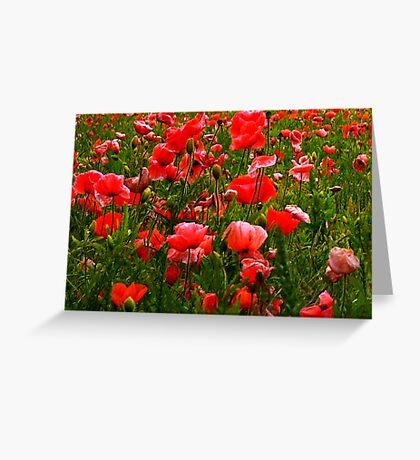 Meadow Flowers Greeting Card