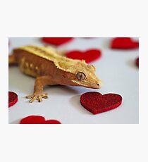 Crestie Love Photographic Print