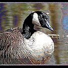 PAINTED GOOSE by BOLLA67