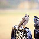 Secret Bird Business   by Melissa Dickson