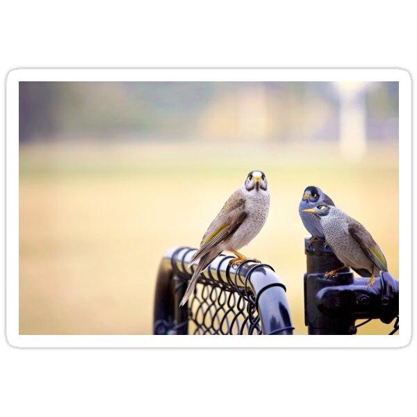 Secret Bird Business