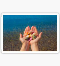 Hands present seashells on the beach first person view  Sticker