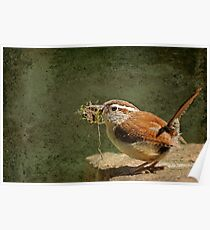 Mother Wren at Work Poster