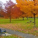 Autumn in the Park by Colleen Drew