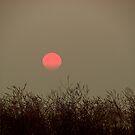 California burning by tabusoro