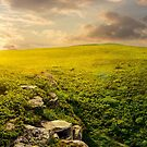 panorama of the hillside meadow at sunset by mike-pellinni