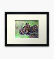 Photo of nature cones Framed Print