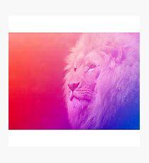 lion wallpaper Photographic Print