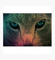 cat face wallpaper Photographic Print