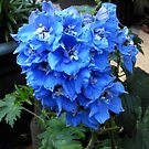 Blue Delphinium by EasterDaffodil