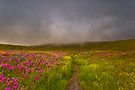Wildflower Trail Into The Clouds by photosbyflood