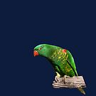 Lorikeet by quentinjlang