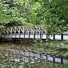 lily  pad bridge  by marxbrothers