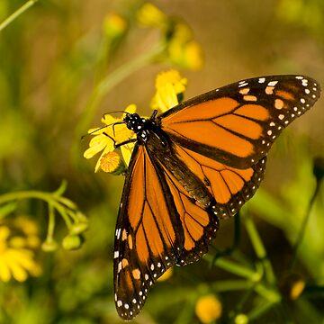 On golden wings by scatrdjason