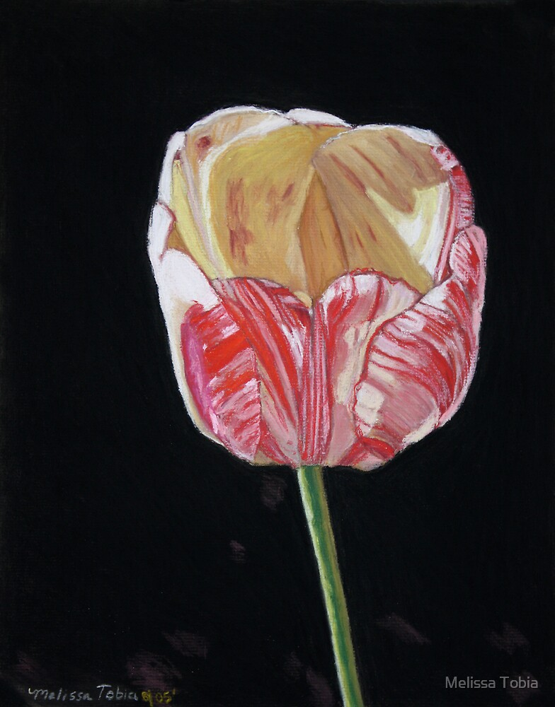 The Tulip by Melissa Tobia