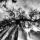the tree by hannamonika