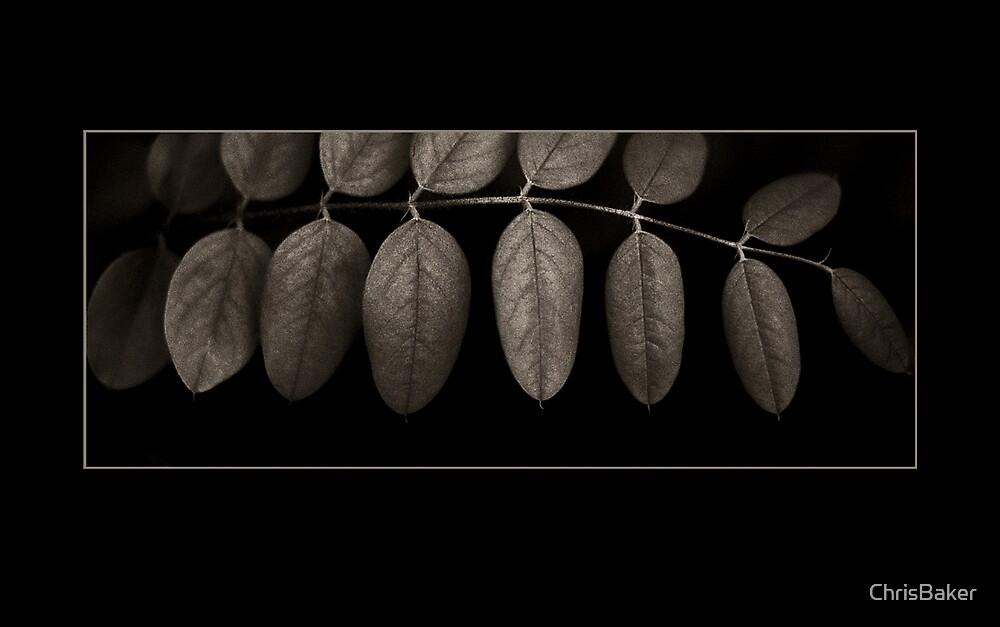 Leaf Landscape by ChrisBaker