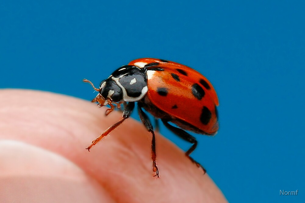 Lady Bug! Or is it? by Normf