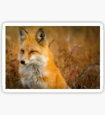 Orange Fox Sticker