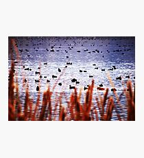 WATERFOWL REFUGE Photographic Print