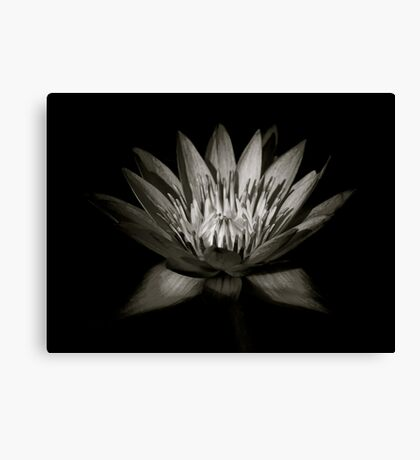 Lotus III Canvas Print
