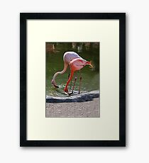 #23 and Friend Framed Print