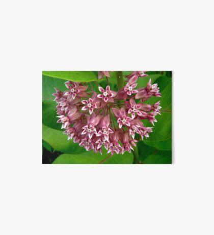 Pink Milkweed Art Board