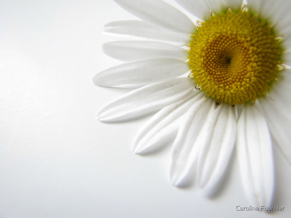 Daisy by Caroline Fournier