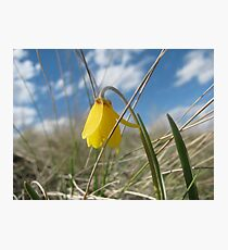The Yellow Bell  Photographic Print