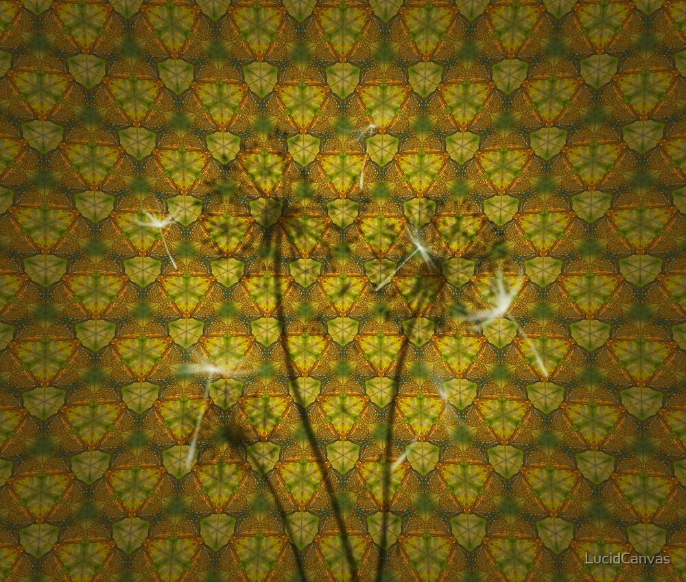 Kaleidoscope of Life by LucidCanvas