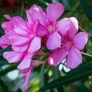 Pinke Blumen von gemlenz