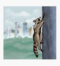 MPR Raccoon print by Megan Tegeder Photographic Print