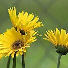 Yellow Gold by Donna Adamski
