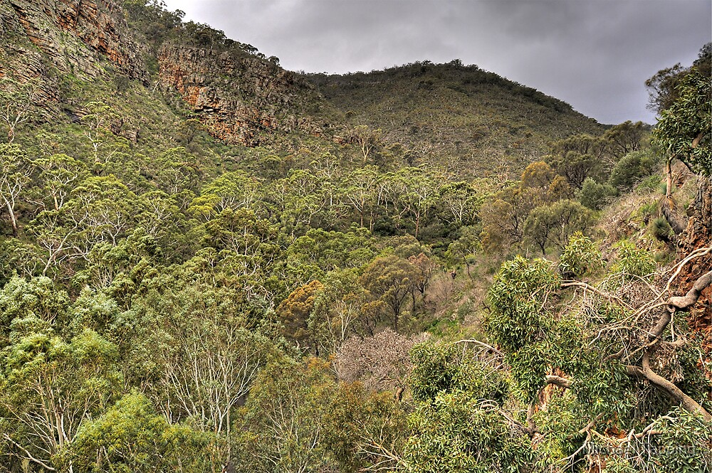 Giants View - Morialta Conservation Park. by Michael Tapping